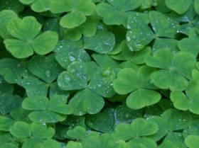 Las 10 razones por las que elegir Irlanda como destino para aprender inglés